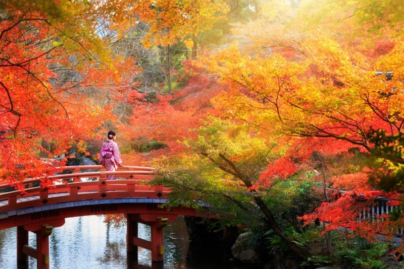 The 15 breathtaking view locations of autumn leaves in Kyoto 2018!