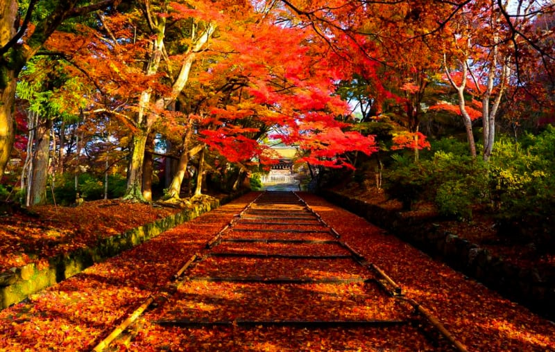 Kyoto Explore shrines as the fall deepens! Top 15 famous places for autumn leaves in Kyoto!